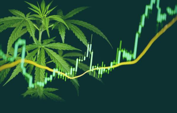 Top 20 Marijuana Penny Stocks List 2020