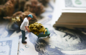 The Five Best Marijuana ETFs to Invest In This Year