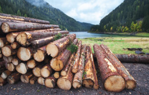 Top 2 Lumber Stocks to Invest in the Wood Industry