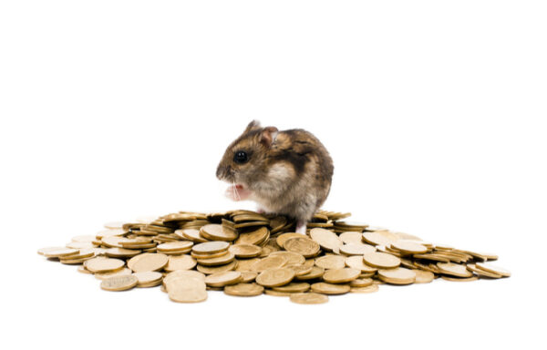 HAM Crypto: How to Buy Hamster Crypto and Why You Shouldn't