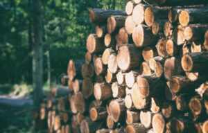 Weyerhaeuser Stock – Betting on the Future of Forestry