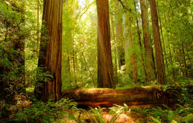 redwood trust stock