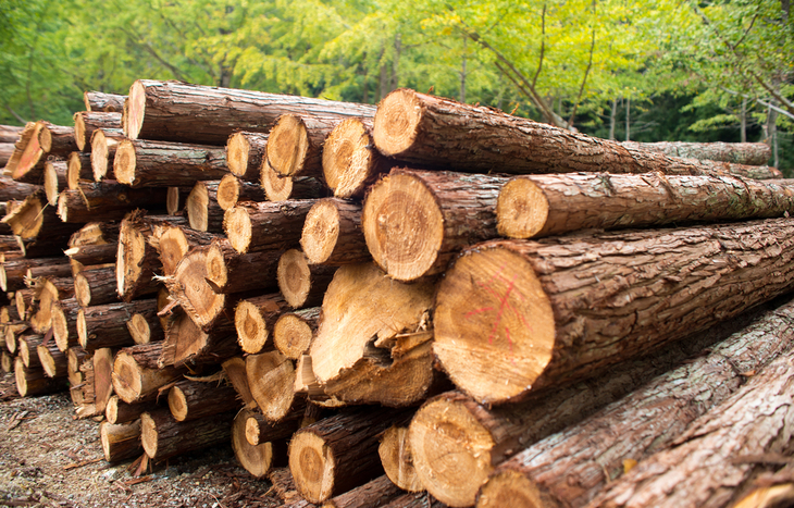 Resolute Forest Products Stock
